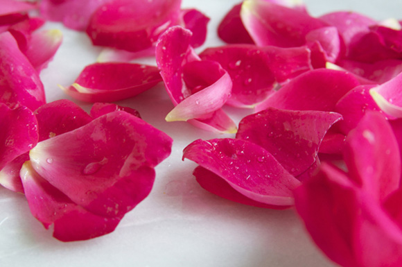 Đôi môi hút hồn đẹp tựa cánh hoa với 4 nguyên liệu từ thiên nhiên3